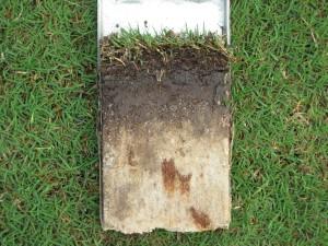 Soil profile 8 inci teratas.