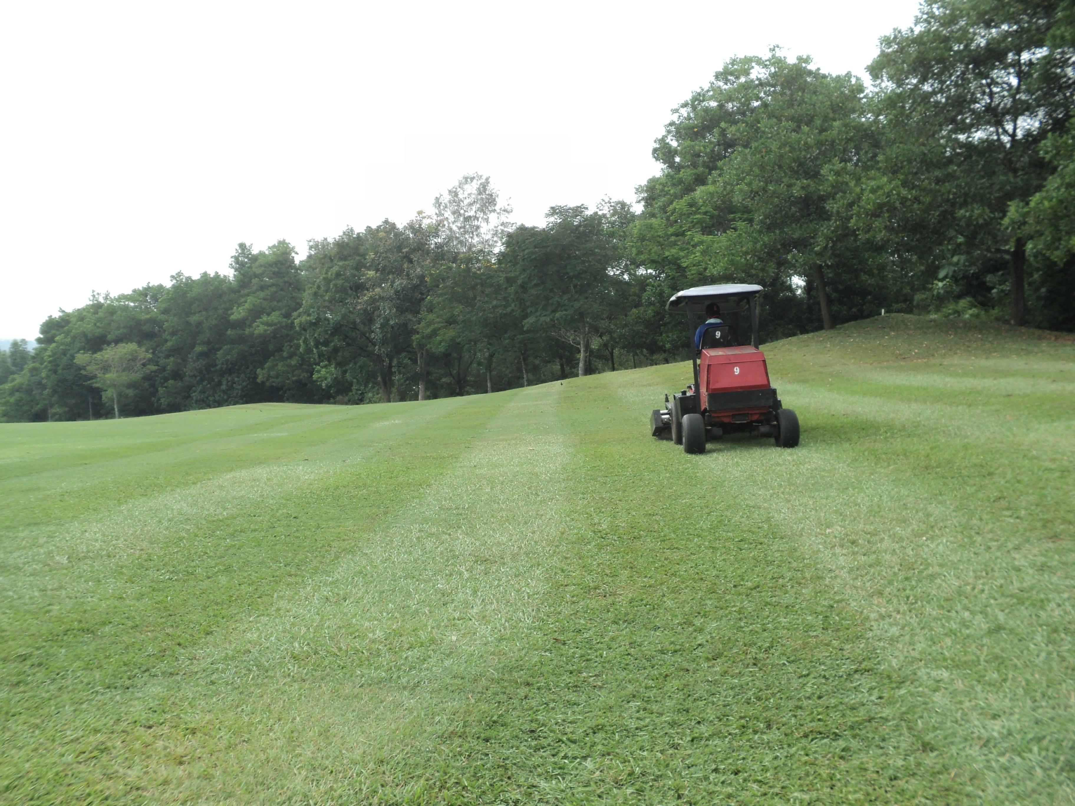 Rumput Di Padang Bola Pakar Biji Golf