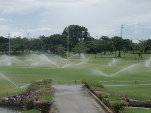 Sprinkler irrigation in a golf course