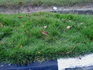 Kerbs are visible. A little effort in maintaining it goes a long way.