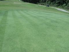 Green di East course sekarang.
