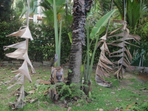 Travellers palm with 2 kids.