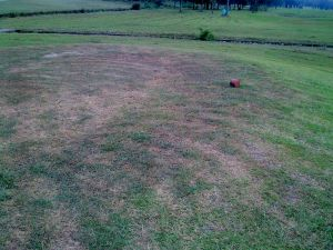 These poor grass has been mown with a brush cutter - maybe the operator has the flu.