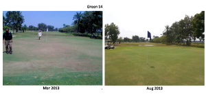 Greens improvement with minimum cost