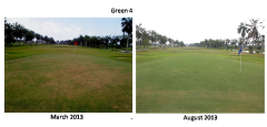 I came in Mar and by Aug, this is what this and other greens look like.