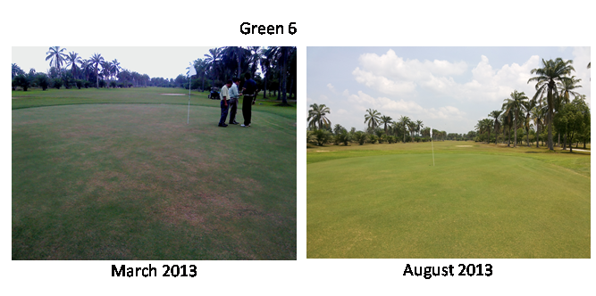 Not just these 3 greens; all greens there show improvement.