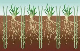 Ini adalah pandangan keratan rentas tanah untuk menunjukkan rumput tulin dan fiber tiruan dalam sistem Desso Grassmaster.