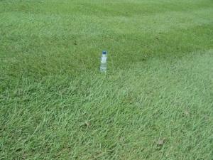 Pedulikan botol air mineral tu. Apa yang saya nak tunjuk ialah arah rumput baring akan menentukan warna belang rumput.