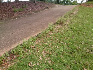 Edging with herbicide
