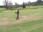 Spraying greens with knapsack sprayer