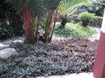 Pokok tahan redup alternatif kepada rumput
