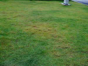 fertilizer not even