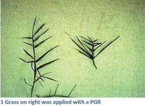 pgr-primo-comparison