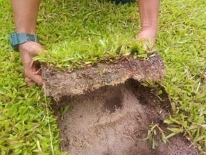 sod thatch padang
