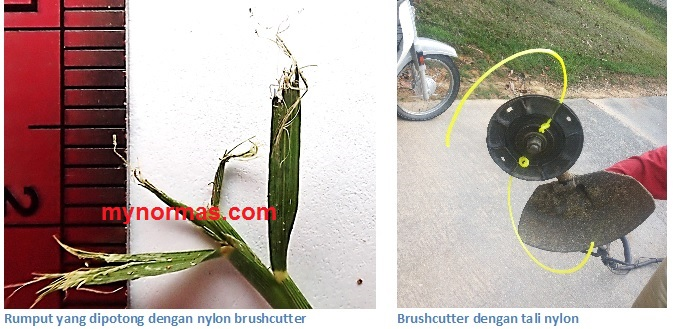 cut with nylon brushcutter