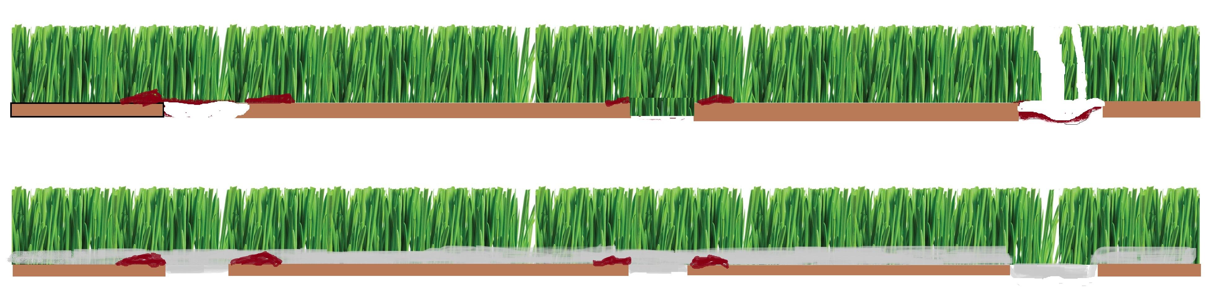 rumput sebelum selepas topdress