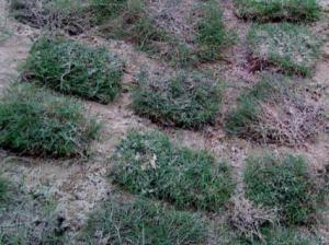 Sod pasir hanyut